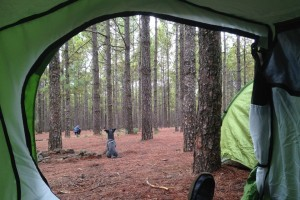 Link to Camping with image of view to forest from tent